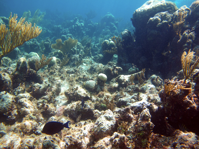 andros bahamas coral reef field research and scuba