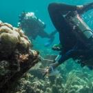 Scientific divers perform a survey.
