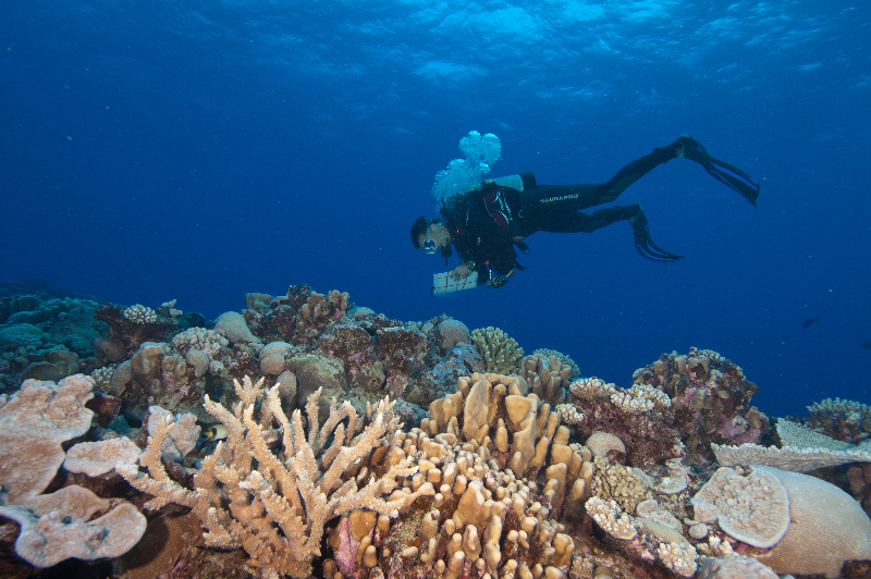 Brian Beck performing a coral survey.