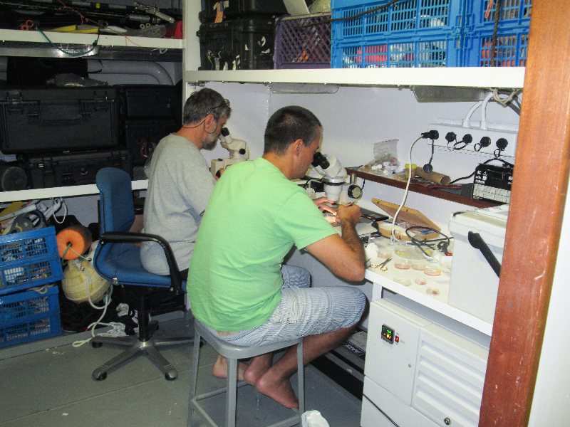 Thomas Cribb and Pierre Sasal working in the lab aboard the Golden Shadow.