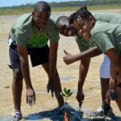 Abaco Central High School Biology students plant mangrove seedlings restoring an area near Camp Abaco.