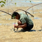 Student from Abaco Central High School plants a mangrove propagule.