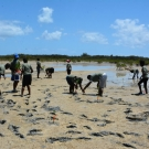 Abaco Central High School students spread out so that they give their mangrove seedlings a large area to grow.