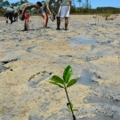 Forest Heights Academy Biology teacher, Lindsey Borsz helps students plant mangrove trees.