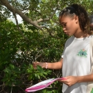 Forest Heights Academy Biology student identifies a red mangrove tree by its leaf.