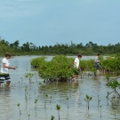 Forest Heights Academy students collect red mangrove propagules at Camp Abaco.