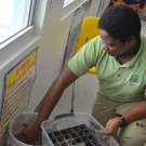 Dirty Jobs - Forest Heights Academy student starts loading the stinky mangrove mud in the plant flat.