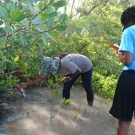 FRIENDS of the Environment's Education Officer, Cassandra Abraham, shows students the prop roots of the red mangrove tree.