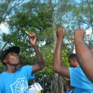 Abaco Central High School students looking at the salt glands on a white mangrove leaf.