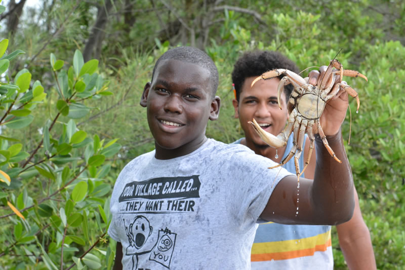 1.A student picks up a crab climbing in the roots of the mangroves.