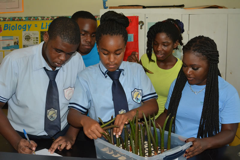 10.Forest Heights Academy students carefully plant mangroves with assistance from FRIENDS Education Specialist Cassandra Abraham.
