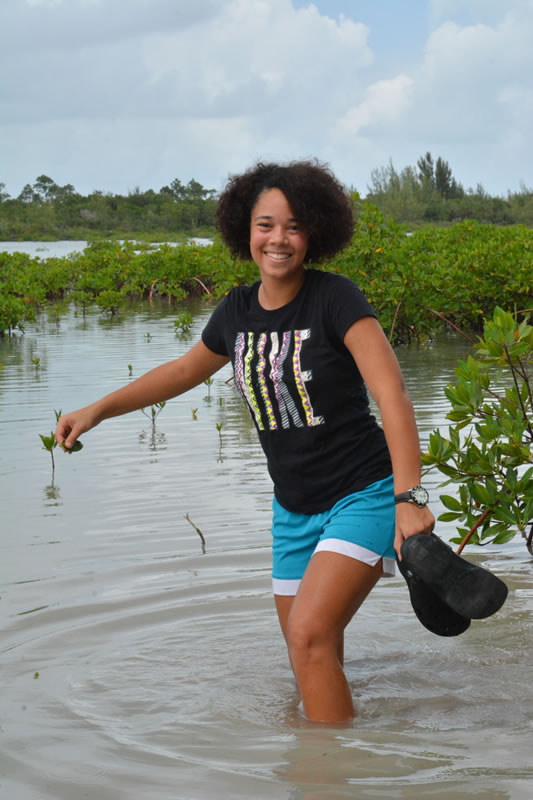 3.It's a slippery, wet, and muddy walk through the mangrove forest to collect a few leaves.