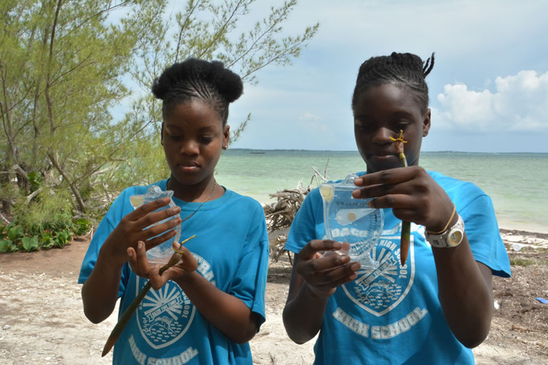 5.Measuring the salinity of water in the mangrove forest.