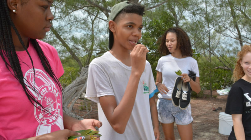 6.Students taste the mangrove leaves they collected (they're salty!).
