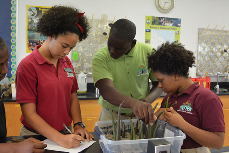 9.Students record the size of the mangrove propagules and the sediment type they are planted in.