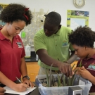9.	Students record the size of the mangrove propagules and the sediment type they are planted in.
