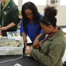 FRIENDS Education Officer Cassandra Abraham helps a student at Forest Heights to identify a sea urchin.