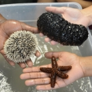 Students at Forest Heights Academy hold a sea urchin, sea star, and sea cucumber, which they learned are animals that are in the Phylum Echinodermata.
