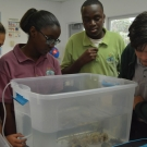 Students at Forest Heights Academy identify the species of fish as part of a mangrove food web activity.