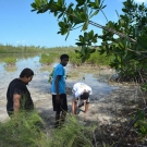 BAM year 2 students from Forest Heights Academy wade into the mangrove mud to sample the pH and dissolved oxygen in their quadrats.