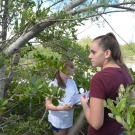 Students at Forest Heights Academy that are in the year 2 program work in teams of 5-6 people in order to monitor the mangroves in a 5 x 5 meter area.