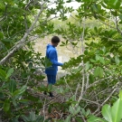 B.A.M. student collects a water sample inside his mangrove plot. He will measure the temperature, dissolved oxygen, salinity, and pH of the water.