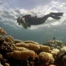 A diver swims over a bleaching reef in BIOT. Photo: Derek Manzello/KSLOF