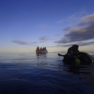 Coral reef ecologist Alex Dempsey surfaces from a sunset dive in BIOT.  Photo: Anderson Mayfield/KSLOF