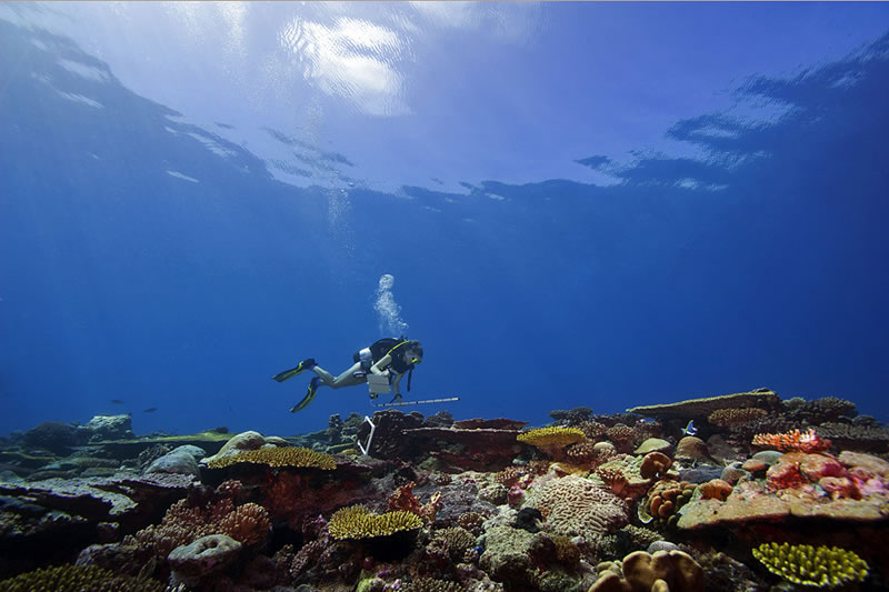 With a lead-core transect line and a PVC meter stick, Kristin Stolberg surveys corals on a colorful section of a shallow reef under glassy calm seas.