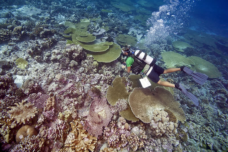 Camera in hand, Anderson Mayfield swims over a reef with high coral cover including branching corals and table acroporids.