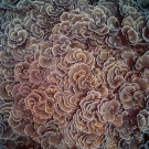 Foliose plates of Echinopora coral form a spiraled pattern when viewed from above.