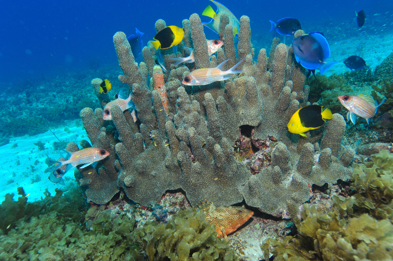 Many types of fish swim through a pillar coral.