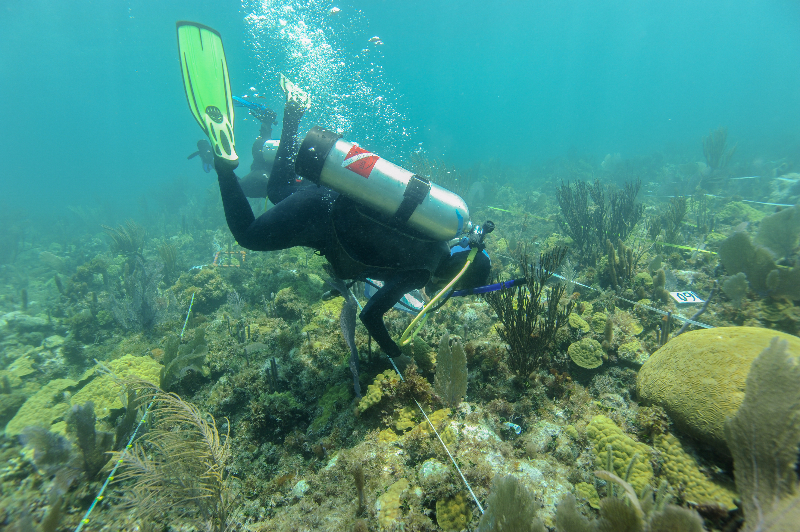 Amanda Williams conducts a survey of the reef.