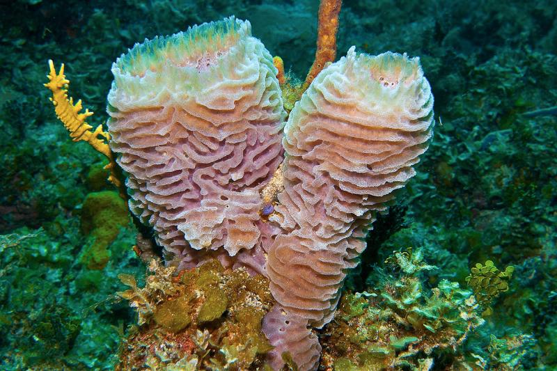 Pink Vase Sponge