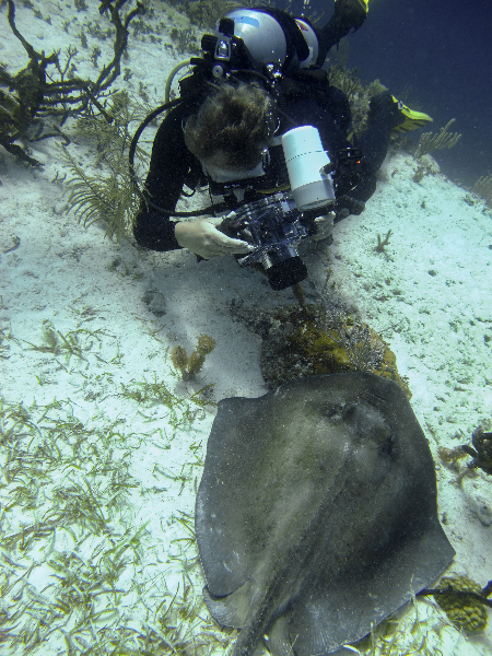Dr. Andrew Bruckner takes a photo of a Southern Stingray.