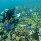 Dr. Andrew Buckner conducts a survey of the reef.