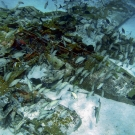 Several types of fish use this sunken plane as an artificial reef.