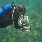 A Scientific Diver photographs a transect.