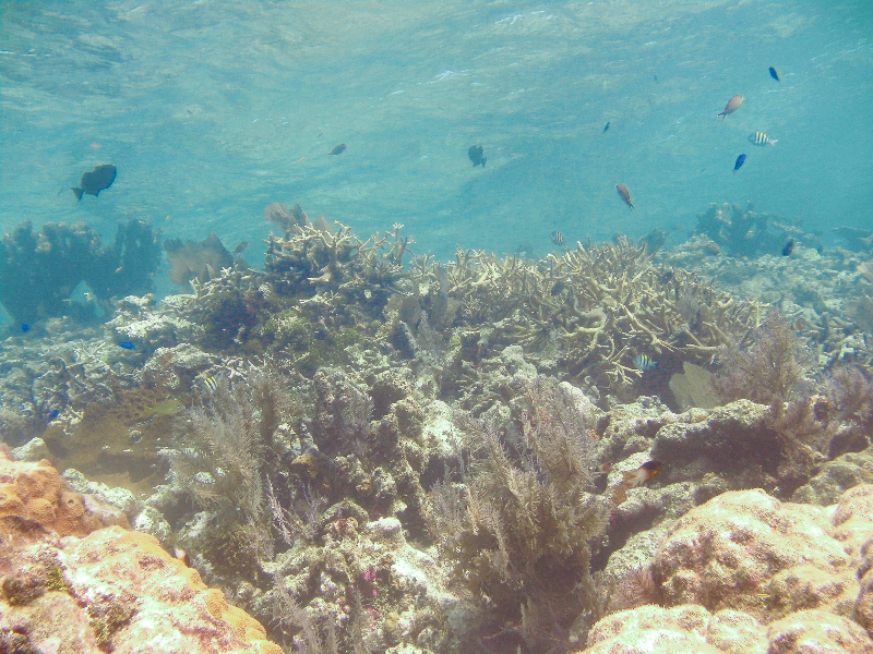Coralscape with many types of coral and fish.