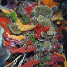 This scene contains many types of coral, algae, and sponges.