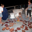 The Science Team anylizing the COTS that they have removed from the reef in crisis.