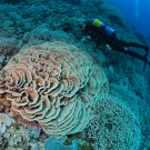 Scientific Diver Megan Cook swims around a healthy field of various types of corals.