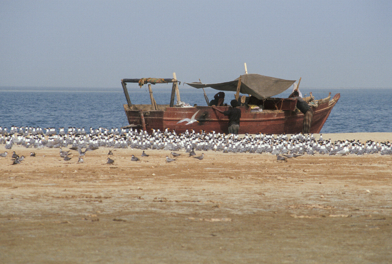 fisherman-island2