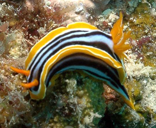 nudibranch-may-17-ah