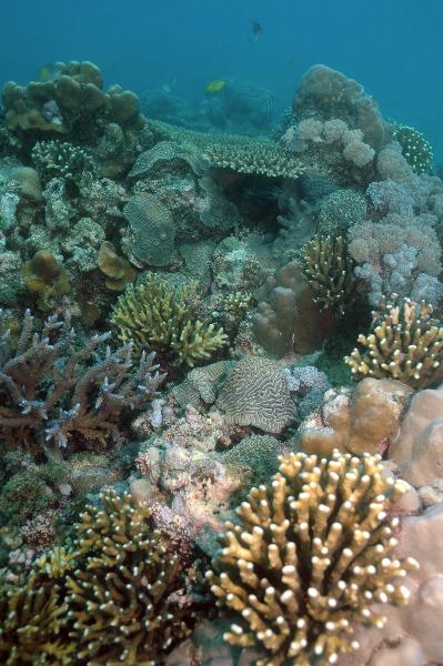 reef-1-may-16-ah