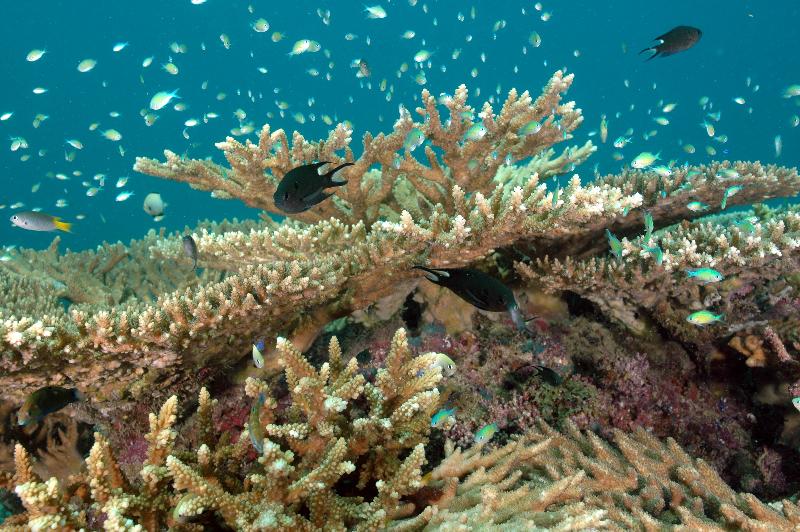 reef-2-may-6-ah