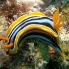 nudibranch-may-17-ah