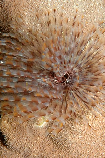 tube-worm-2-may-10-ah
