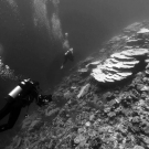 Filming a mass bleaching event in the Indian Ocean while on the Global Reef Expedition.