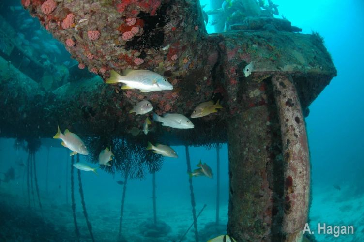 encrusting_corals-302-950-500-80